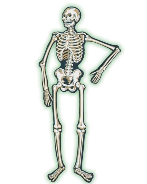 Große Cut-out Figur Skelett, 140 cm, Leuchtet im Dunkeln