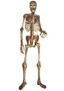 Party-Extra Dekofolie Mr. Bones, 210 cm