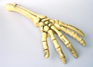 Skelett-Hand aus Kunststoff
