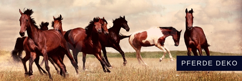 Pferde Deko Reitsport Mustang Dekorationen